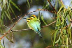 Schöner Vogel im Millstream Chichester NP_11_1