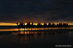 Kamel-Karawane bei Sonnenuntergang in Broome am Cable Beach (1)