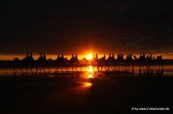 Kamel-Karawane bei Sonnenuntergang in Broome am Cable Beach (2)