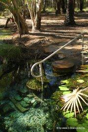 Bitter Springs - Elsey NP (2)