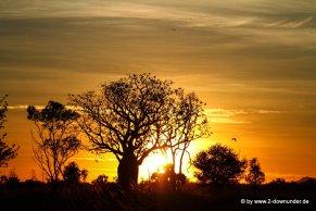 Boab-Baum im Sonnenaufgang_25