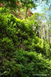 El Questro Wildernesspark (4)