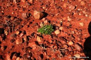 Kleine Pflanze zwischen den Steinen