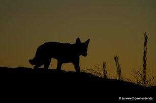 Dingo bei den Devils Marbels (6)