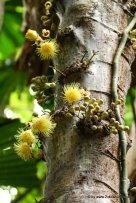 Blüte am Baum (2)