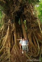 Kati mit Eltern beim Regenwaldwalk am Lake Echam