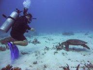 Kati und Schildkröte beim Tauchen am GBR (2)