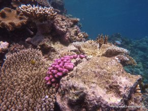 Korallen und Fische am GBR (10)