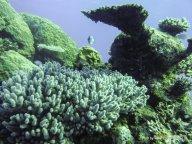 Korallen und Fische am GBR (14)