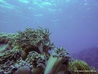 Korallen und Fische am GBR (17)
