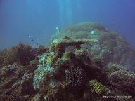 Korallen und Fische am GBR (18)