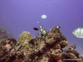 Korallen und Fische am GBR (20)