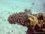 Korallen und Fische am GBR(25)