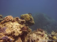 Korallen und Fische am GBR (31)