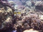 Korallen und Fische am GBR(5)
