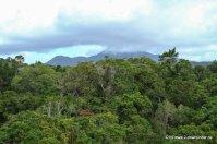 Regenwald von der Skyrail aus
