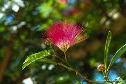 Schöne Blüte