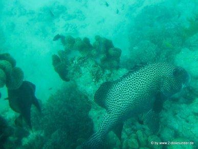 Unterwasserwelt beim Schnorcheln am Great Barrier Reef (1)
