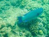 Unterwasserwelt beim Schnorcheln am Great Barrier Reef (12)