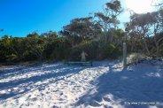 Falk am Whiteheaven Beach