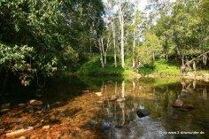 Fluss im Eungella NP