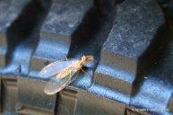 Komisches Insekt am Reifen